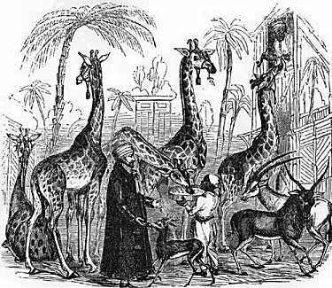 Giraffes at Surrey Zoological Gardens, Illustrated London News 1843